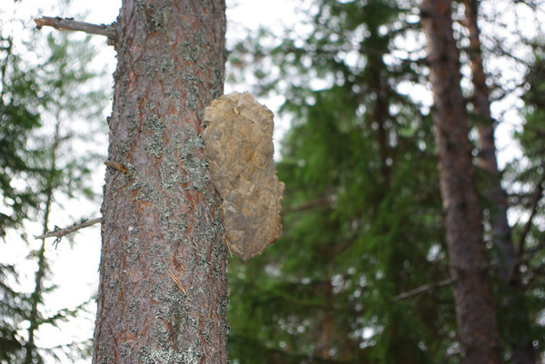 http://content.foto.mail.ru/mail/shel1983/18_09-02_10-11-4/i-55277.jpg