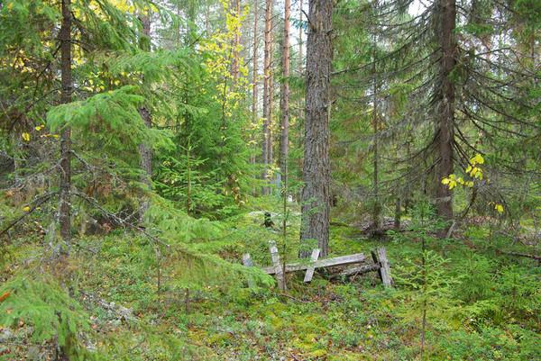 http://content.foto.mail.ru/mail/shel1983/18_09-02_10-11-4/i-55287.jpg