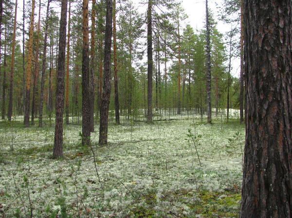 http://content.foto.mail.ru/mail/shel1983/mez-2012_d12/i-60237.jpg