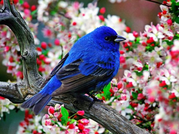 """Схема вышивки  """"Синяя птица счастья """": оригинал."""