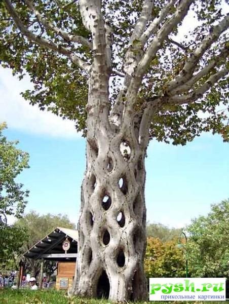 Как называется дерево паразит