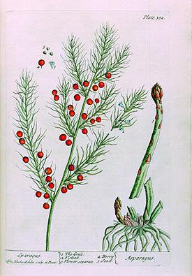 семена гвоздики от паразитов