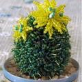Описание: Кактус с двумя желтыми цветами делается на яйце пенопластовом высотой 6 см. Петелька состоит из восьми...