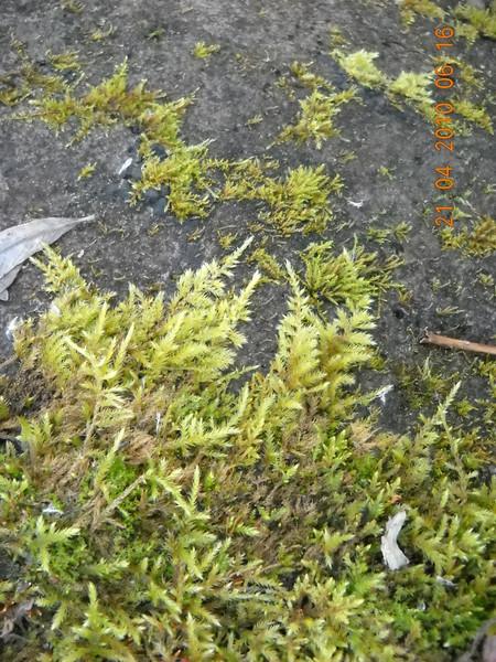 Это мох такой - Сфагнум/Sphagnum.  Болотный.  Что-то я не увидел грибов на фото... березы...