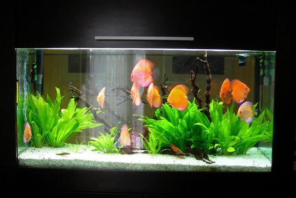 Светильник на аквариум своими руками