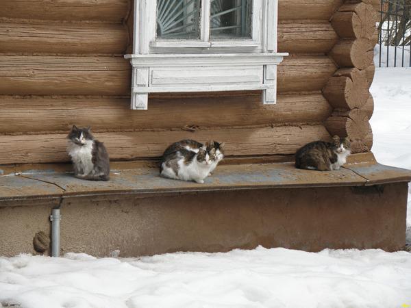 кошки из Мелихово 1