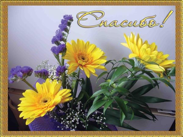 http://content.foto.mail.ru/mail/telec-e/2722/i-5555.jpg