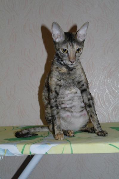 CAT-форум :: Просмотр темы