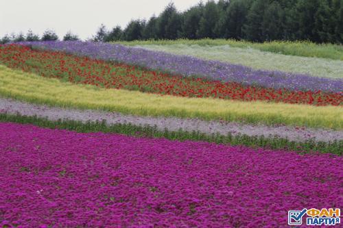 Сиренево-розово-лиловые