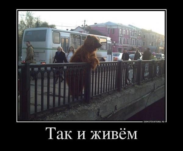 фото русского медведя в шапке ушанке