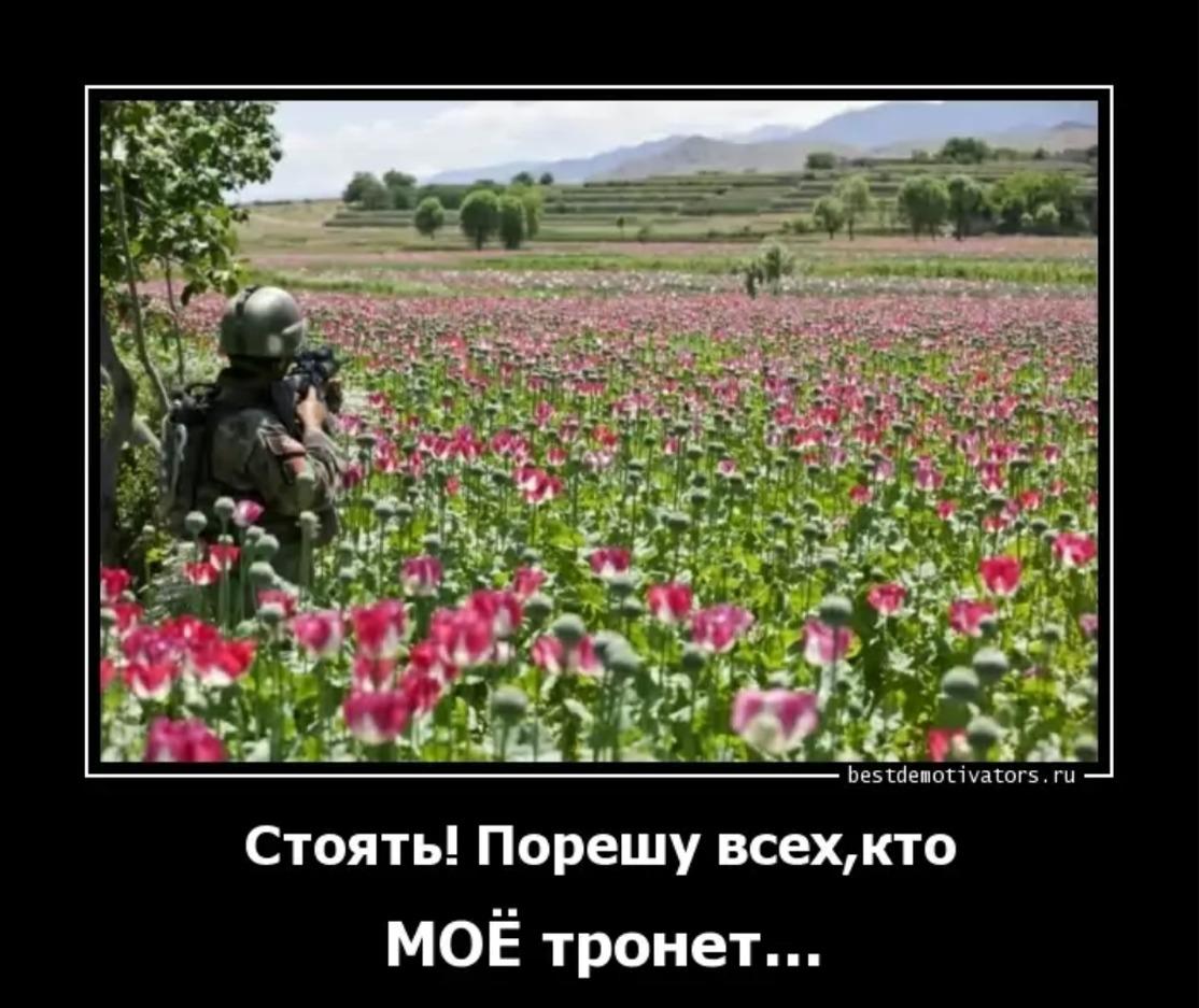 У самоселов Чернобыльской зоны отчуждения обнаружили плантации мака - Цензор.НЕТ 1096
