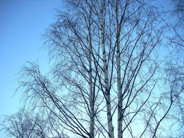 http://content.foto.mail.ru/mail/tspektor/1/i-273.jpg