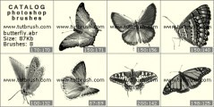 Download кисти фотошоп Красивые бабочки