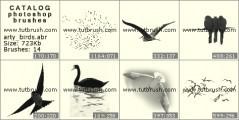 Download кисти фотошоп Изображения птиц