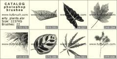 Скачать кисти фотошоп Листочки растений