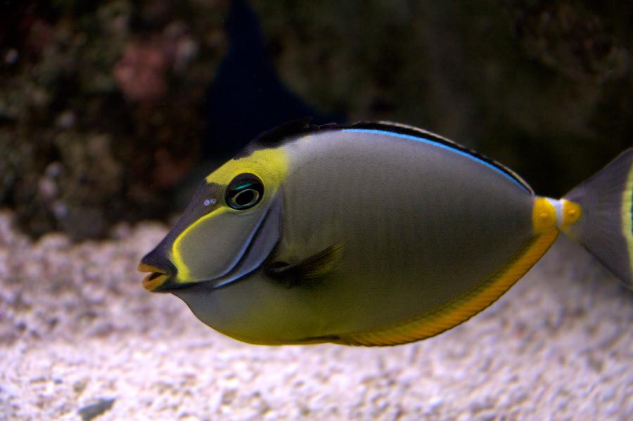 Говорящая рыба