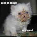 Смешные котяры с надписями - Сборка 8.