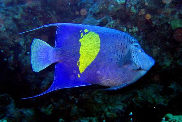 ...разнообразных причудливых рыб, рыбин и просто рыбок Красного моря.