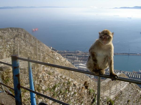 Gibraltar - Morocco