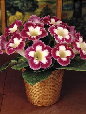 цветы из бисера глоксиния - Бисероплетение для Всех!