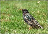 Это фото расположено в архивах: дикие птицы фото и птицы ростовской.