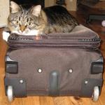 чемодан на колесиках