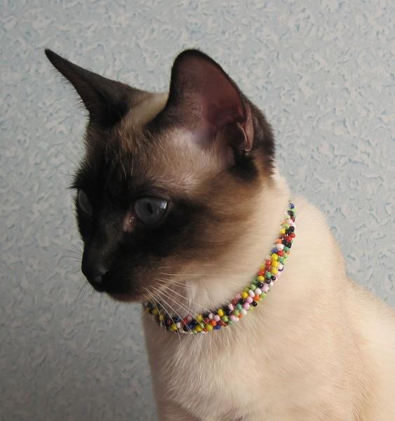 Украшения для кошек фото