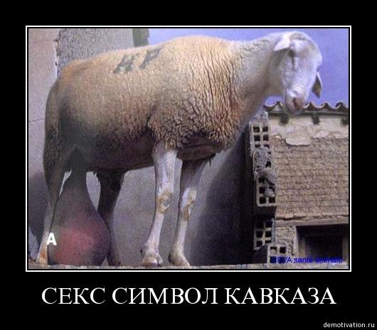 Секс символ кавказа.