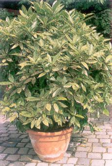 Растения по знакам зодиака  Все о цветах