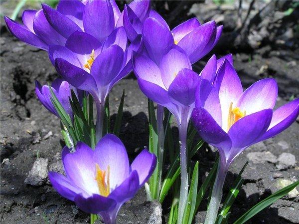 Андрей Державин Первые Цветы