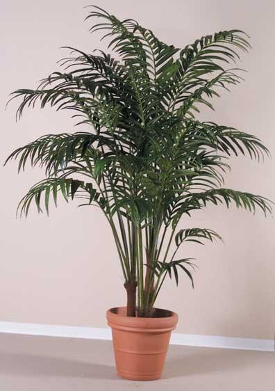 ...лучшие представители декоративно-лиственных растений для выращивания в комнатых условиях, хотя лучшее место для...