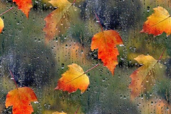 Осенние  пейзажи - Страница 2 I-529