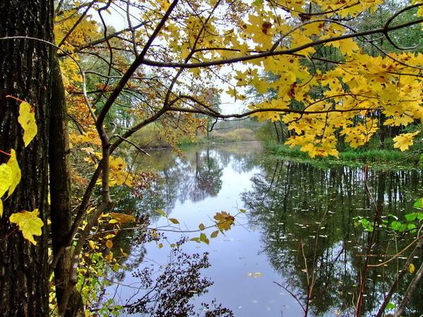 Осенние  пейзажи - Страница 2 I-3940