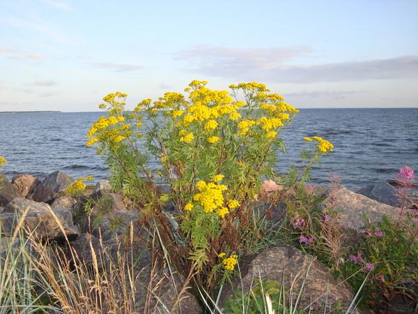фото жёлтых цветов