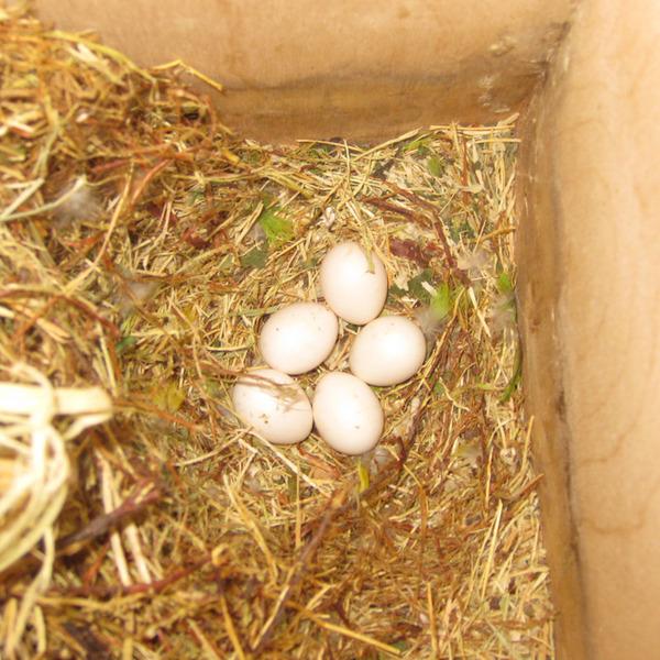 Гнездо для попугая своими руками