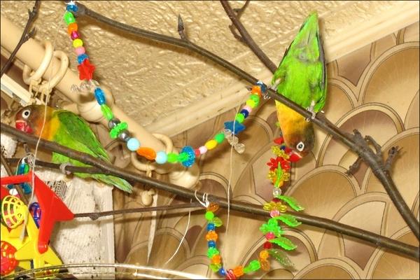 Игрушки для попугая своими руками фото