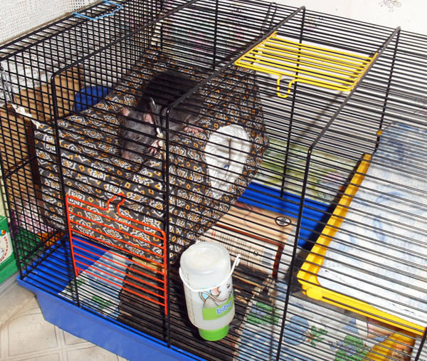 Как сделать домик для домашних крыс